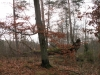 2011-11-26_r